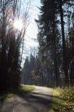 floresta do abeto do outono de novembro Foto de Stock Royalty Free