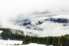 Floresta do abeto vermelho na névoa e na neve Fotografia de Stock Royalty Free