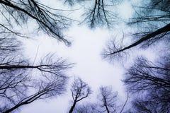 Floresta do amor Foto de Stock Royalty Free