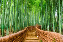 Floresta do bambu de Kyoto, Japão imagens de stock royalty free