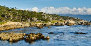 Floresta do beira-mar Imagens de Stock Royalty Free