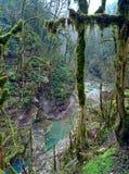 Floresta do buxo fotografia de stock royalty free