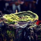 A floresta do cogumelo foto de stock