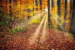 Floresta do conto de fadas Fotos de Stock Royalty Free