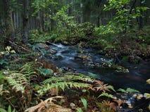 A floresta do conto de fadas Imagens de Stock Royalty Free