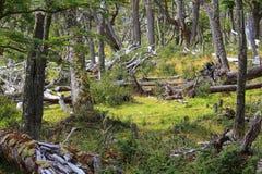 A floresta do conto de fadas Fotos de Stock Royalty Free