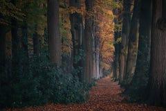 Floresta do conto de fadas com com as árvores altas e as folhas coloridas na terra fotografia de stock