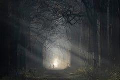 Floresta do conto de fadas com o sol que brilha através das árvores Imagem de Stock