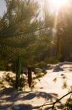 Floresta do conto do inverno Fotografia de Stock