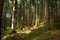Floresta do detalhe Imagens de Stock