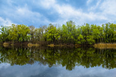 Floresta do espelho Fotos de Stock