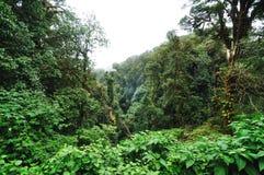 Floresta do Evergreen do monte imagem de stock royalty free