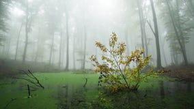 Floresta do Fogy com sons chuvosos da natureza vídeos de arquivo