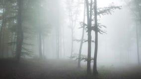 Floresta do Fogy com sons chuvosos da natureza video estoque