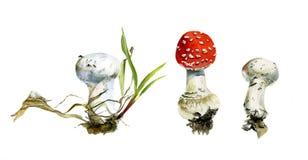 A floresta do grupo cresce rapidamente, agaric e capas de chuva, pintura da aquarela fotografia de stock royalty free