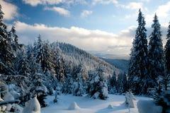 Floresta do inverno Imagens de Stock Royalty Free