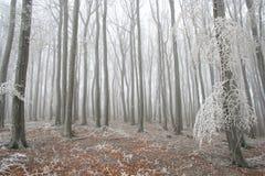 Floresta do inverno Imagem de Stock Royalty Free