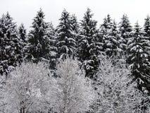 Floresta do inverno Fotos de Stock Royalty Free