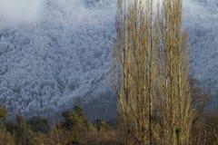 Floresta do inverno Foto de Stock Royalty Free