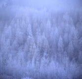 Floresta do inverno Fotografia de Stock Royalty Free
