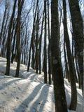 Floresta do inverno Fotos de Stock
