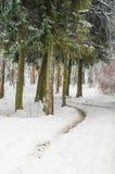 A floresta do inverno Fotos de Stock Royalty Free