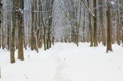 A floresta do inverno Foto de Stock Royalty Free