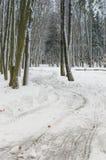 A floresta do inverno Foto de Stock