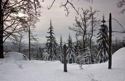 Floresta do inverno (ainda vida) Foto de Stock Royalty Free