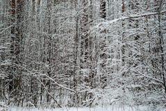 Floresta do inverno após a queda de neve imagem de stock