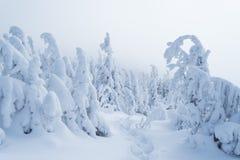 Floresta do inverno após uma queda de neve Foto de Stock Royalty Free
