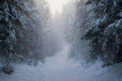 Floresta do inverno coberta com a neve no embaçamento gelado imagens de stock