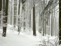 a floresta do inverno com geada cobriu árvores Imagens de Stock