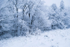 Floresta do inverno com neve Fotografia de Stock Royalty Free