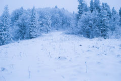 Floresta do inverno com neve Fotos de Stock Royalty Free