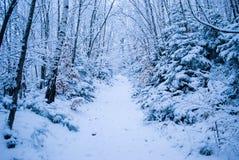 Floresta do inverno com neve Imagens de Stock