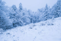 Floresta do inverno com neve Foto de Stock Royalty Free