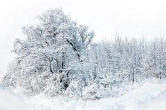 Floresta do inverno com neve Fotografia de Stock