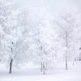 Floresta do inverno com neve Imagem de Stock Royalty Free