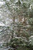 Floresta do inverno com neve nas árvores Foto de Stock