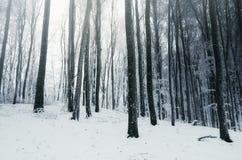 Floresta do inverno do conto de fadas com neve Fotografia de Stock Royalty Free