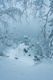 Floresta do inverno do conto de fadas Imagem de Stock