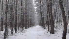 Floresta do inverno durante uma queda de neve video estoque