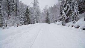 Floresta do inverno durante uma queda de neve pesada vídeos de arquivo