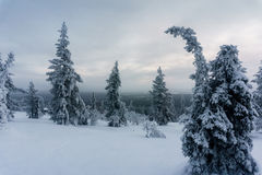Floresta do inverno em Finlandia do norte Fotos de Stock