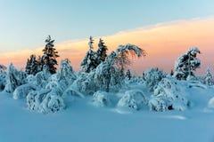 Floresta do inverno em Finlandia do norte Fotografia de Stock