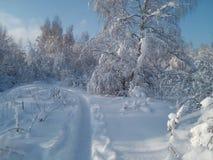 Floresta do inverno em Rússia fotos de stock royalty free