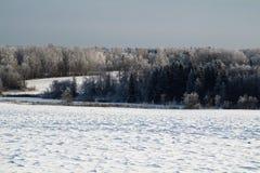 Floresta do inverno em Rússia Paisagem foto de stock
