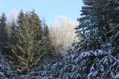 Floresta do inverno em um conto de fadas Foto de Stock