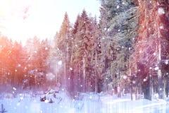 Floresta do inverno em um dia ensolarado Paisagem na floresta em um nevado Imagens de Stock